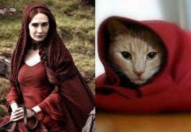 game-of-thrones-cats-11