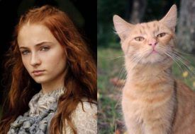 game-of-thrones-cats-14