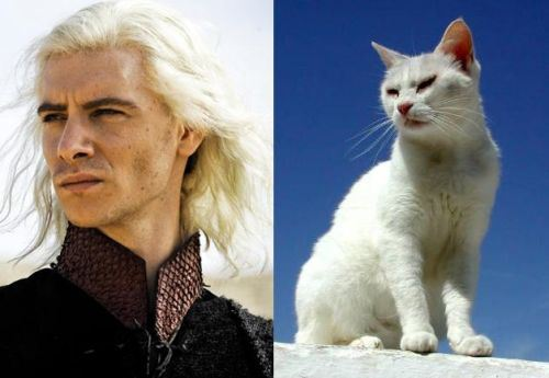 game-of-thrones-cats-17