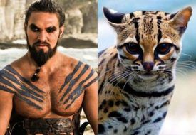game-of-thrones-cats-9